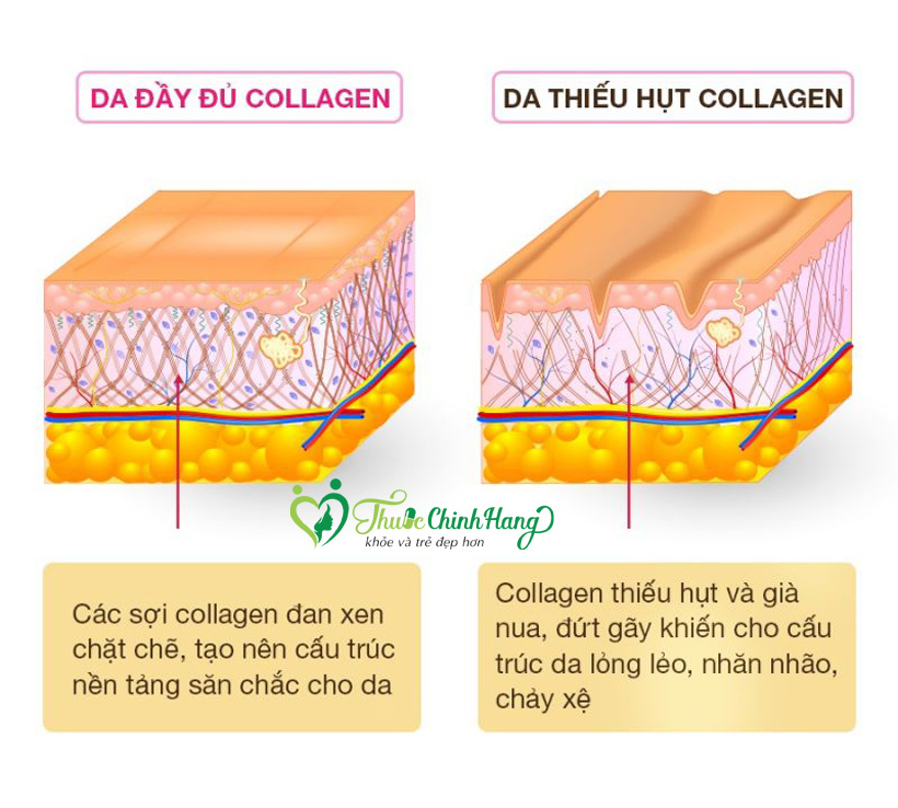 do tuoi nao can bo sung collagen
